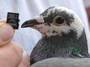 http://arrosyadi.files.wordpress.com/2010/04/76566_winston__sang_burung_merpati_dan_paket_data_yang_ia_antarkan_300_225.jpg